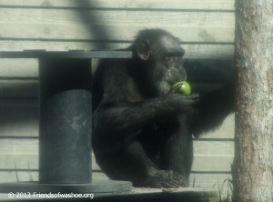 Tatu especially liked the apples!